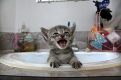 Let me out! via @EmrgencyKittens