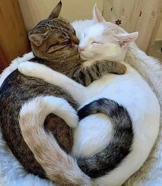 Kitten Love, Cat Love, Animals And Pets, Cute Animals, Animals Photos, Baby Sunglasses, Gato Gif, Cool Art Drawings, How To Show Love