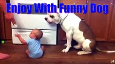 Funny dog video | funny Animals compilation | Funniest pets Fails Videos...