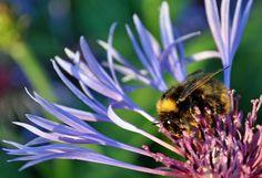 Bee at work | Flickr - Photo Sharing!