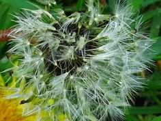 Dívám se okolo - fotoblog: Po dešti Herbs, Herb, Medicinal Plants