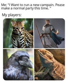 "Me: ""I Want to run a new campain. Pease make a normal party this time. "" My players: - iFunny :) Dnd Druid, Dnd Stories, Dnd Funny, Dungeons And Dragons Memes, Dragon Memes, Popular Memes, Funny Pictures, Funny Memes, Creatures"