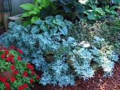 Easy To Grow Shade Plants for Flowerbed Garden Designs
