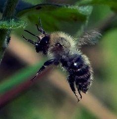 flying bee #mike #ilikethis