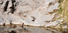 Quebrada de La Plata: un ecosistema amenazado en Santiago
