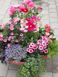 sommerlich bepflanzten Schale