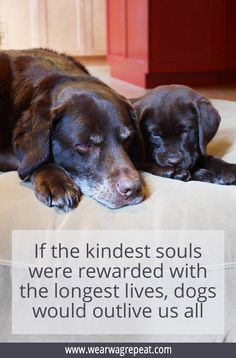 mom inspiration If the kindest souls were rewarded with the longest lives, then dogs would outlive us all. This is the sweetest Throwback Thursday quote for dog moms! Labrador Quotes, Dog Quotes, Throwback Thursday Quotes, I Love Dogs, Puppy Love, Minions, Basic Dog Training, Service Dogs, Happy Dogs