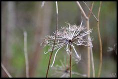 Dans les prairies entre hiver et printemps
