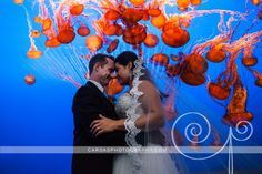 monterey bay aquarium jellyfish wedding - Google Search