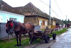 Typical village in rural Romania.  It felt like we went back in time...like the 1500's? Few cars, lots of farming, basic dwellings.  Nice experience.