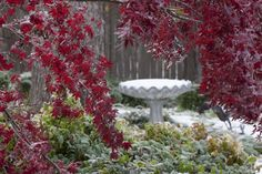 Ryan Place Fort Worth - one of its gardens in winter Winter Garden, Fort Worth, The Neighbourhood, Garden Ideas, Gardens, Places, Lugares, Sunrooms, Outdoor Gardens