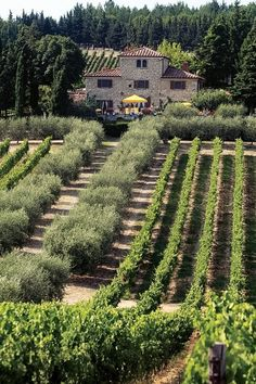 This is exactly how I envisioned the Danalli vineyard. The Cuillo vineyards at Casalvento, Tuscany, Italy - Livernano winery - Casalvento winery Under The Tuscan Sun, Temecula Valley, Wine Vineyards, Italian Villa, Italian Wine, Tuscany Italy, Venice Italy, Wine Country, Dream Vacations