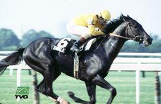 Kentucky Derby and Belmont Stakes Winner 1984 Swale