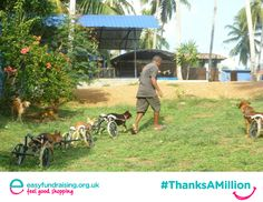 """""""#ThanksAMillion Easyfundraising say all the cart-gang (disabled dogs) at the sanctuary #Animal SOS Sri Lanka sanctuary. Every penny helps us so much!"""" #Giving #Fundraising #Charity"""