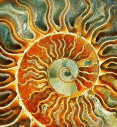 Solstice-nautilus