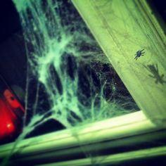 Moscas y arañas