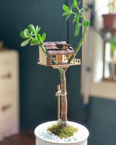A community focused on the discussion, care, and well-being of houseplants! One Word Art, Planting Succulents, Succulent Plants, Houseplants, Plant Hanger, Planter Pots, Hanging Planters, Cool Stuff, Random Stuff