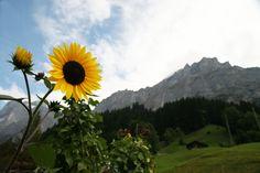 Rough Guides Switzerland