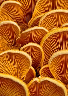 Weird and Wonderful Fungi Pictures - The Photo Argus Mushrooms - natural form texture and colour inspirationsMushrooms - natural form texture and colour inspirations Natural Forms, Natural Texture, Brown Texture, Gold Texture, Patterns In Nature, Textures Patterns, Nature Pattern, Fungi Pictures, Pattern Texture