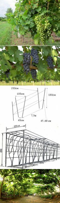 Опора для винограда своими руками: виды, размеры, правила установки, как подвязать виноград к опоре, фото, видео