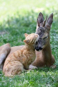 si sa c'est pas de l'amour encore une fois que les animaux son plus  développé que l'être humain  sens commentaire
