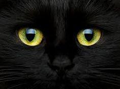 Resultado de imagen para gatos misteriosos y magicos