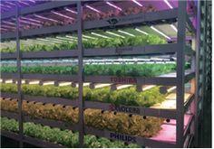 日, 미래 식량위기를 대비할 식물공장 재조명-산업·상품-kotra 해외시장뉴스