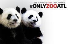 Welcome to Zoo Atlanta