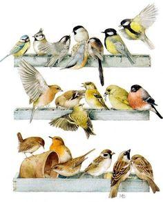 A gathering of birds by Marjolein Bastin Illustration Blume, Marjolein Bastin, Nature Sketch, Nature Artists, Dutch Artists, Watercolor Bird, Wildlife Art, Bird Prints, Bird Art