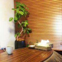 ウッドブラインド/ゴムの木/アルテシマゴム/観葉植物/こたつ/My Desk…などのインテリア実例 - 2014-04-04 05:02:47 | RoomClip(ルームクリップ)