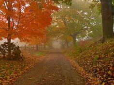 Foggy autumn day. Photo by b k.