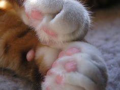 Ringo's cute toesies. photo by E. Kane.