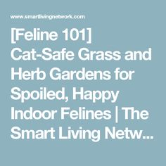 [Feline 101] Cat-Safe Grass and Herb Gardens for Spoiled, Happy Indoor Felines | The Smart Living Network
