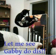 Oh My Freaking Stars!: Cats & Gabby