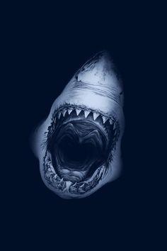 Shark Jaws iPhone 5 Wallpaper