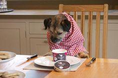 Receta para perros: helado de plátano para los días más calurosos