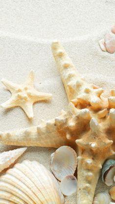 Pure Seaside Beach Starfish Seashell #iPhone #5s #wallpaper