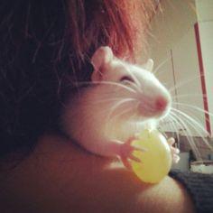 Smile :) rattie with treat
