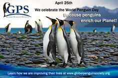 Penguin Day, Penguins, Twitter, World, Animals, Animales, Animaux, Penguin, Animal