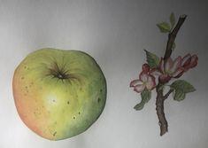 My Arts, Apple, Fruit, Food, Apple Fruit, Essen, Meals, Yemek, Apples