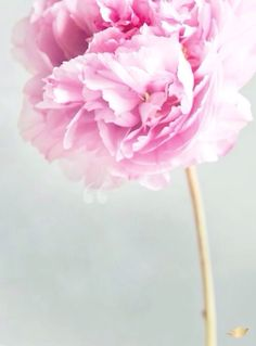 Home Quotes Sayings And Affirmations Pinterest Flower Quotes