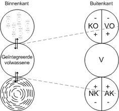 Structurele Egotoestanden. Onderdeel van een belangrijk concep uit de Transactionele Analyse.