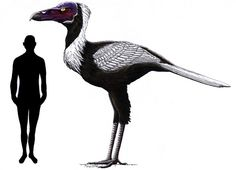 Paracrax gigantea/antiqua by Ornito Frenia Bathornithidae was a lineage of flightless birds closely related to the more famous terror birds and modern seriemas that lived in North America from the Eocene to Miocene.