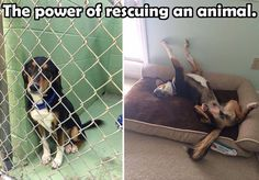 The power of rescue is priceless...