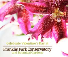Celebrate Valentine's Day at the Conservatory. Wine and chocolate tastings, live music, beautiful flowers, stunning artwork. All with no reservations!