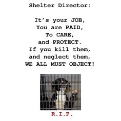 Dear Shelter Director - it's your JOB!!  (Graphic from Heart of Leo Animal Shelter)