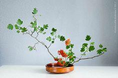 Variation 2, slanting style, moribana (Gingertail) Tags: flower art japan ikebana class upright arrangement soe shin keisei sogetsu moribana hikae variation2