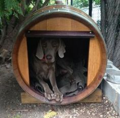 Spoil your dog with this one of a kind dog house made from an actual #wine barrel from Rosehill Wine Cellars. #wineaccessories #winestorage