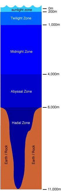 Model showing the relative depths of the ocean zones