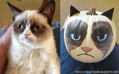 Grumpy Cat Pumpkin DIY - Step by step instructions make it easy to paint this adorably grumpy cat pumpkin (What a great idea and easy too!)